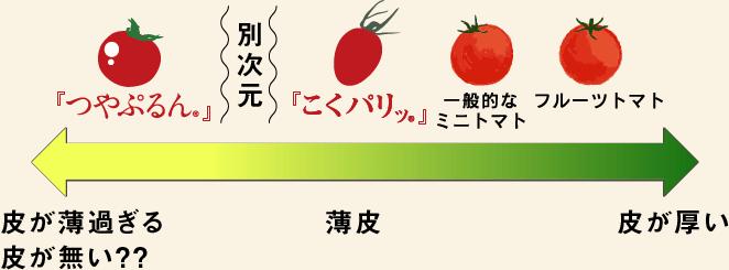 トマトの皮の厚み