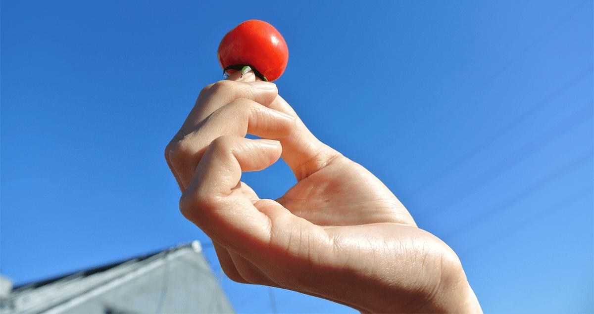 ミニトマトを掲げている写真